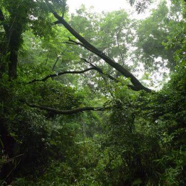 六甲 トレイルランニング 長峰山