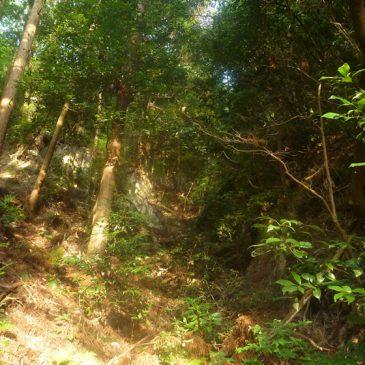 神戸を走ろう!長峰山に登って秋を感じる!に行ってきました!