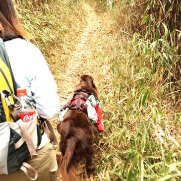 家族で登山 油コブシ〜摩耶山に行って来ましたよ!