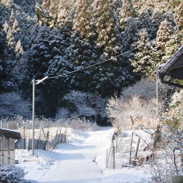 篠山市の金山に登ってきましたよ
