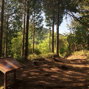 最近のトレーニング・イチゴ狩り・今年初の西山谷