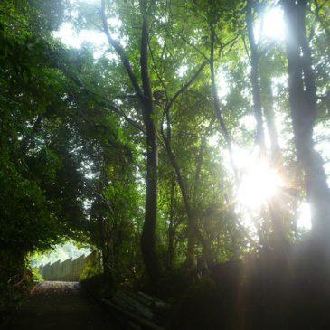 神戸を走ろう!西山谷で癒されマックス!行ってきました。