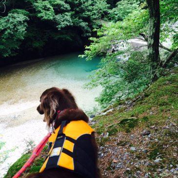 Shellちゃんの川遊び・芦屋アクアスロン走ってきました。